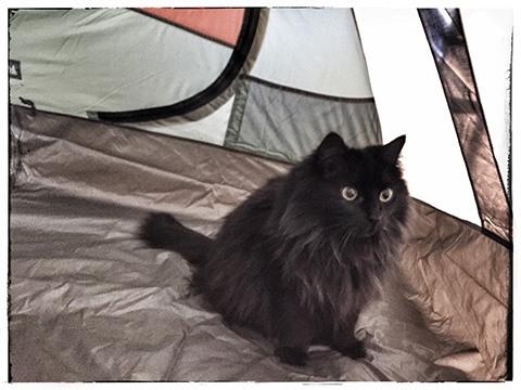 tent_kitty