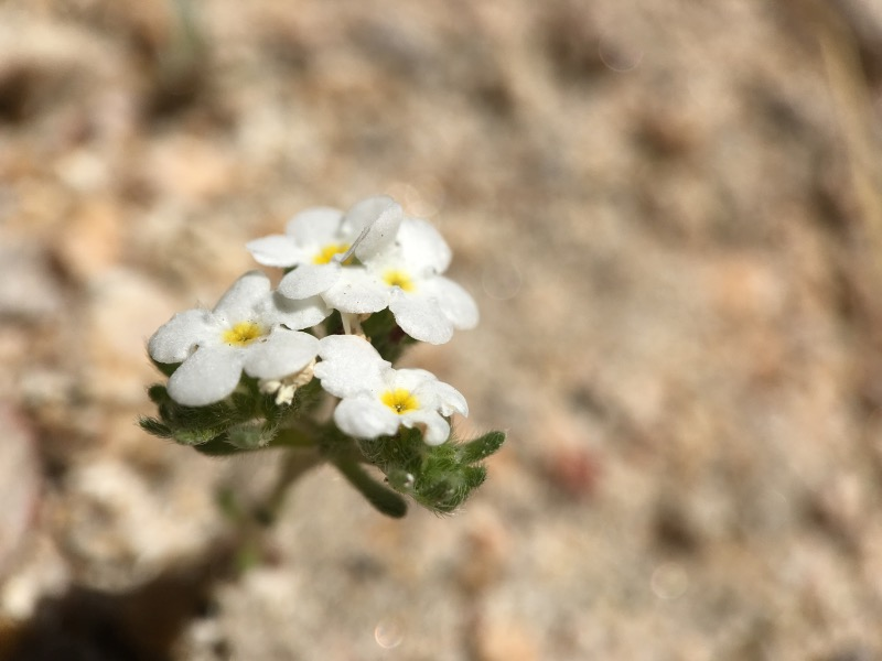 Tiny flowers growing in the sand.