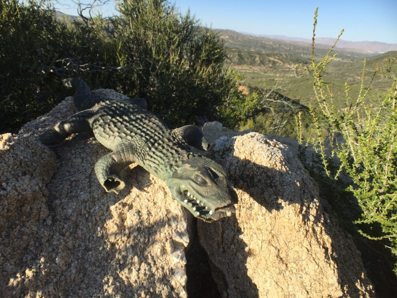 This. After hiking all day then scrambling off the trail to find a campsite, this was sitting on a rock staring up at me. Scared me more than the rattlesnake. (We still decided to camp in that spot.)