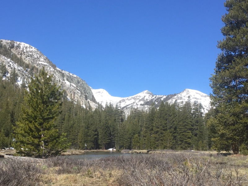 The tiny speck in front of that snow patch is a huge bear! (Cameras don't always capture reality.)