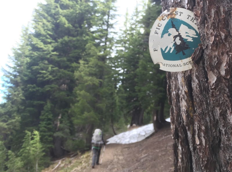 Tree trunk rejecting the PCT shield.